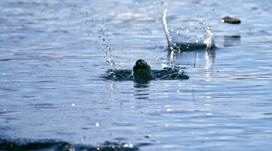 今日の英語: 水切り(水面に石を跳ねさせる遊び)