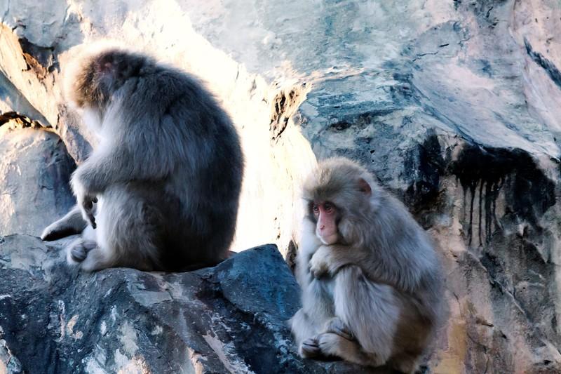今日の英語:猿真似
